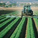 Veszélyes hamisítás: rákot és meddőséget is okozhatnak a nem megfelelő növényvédelmi szerek