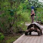 Már a Galápagos-szigetekről is készül Street View
