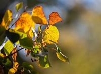 Nem vicc, tényleg visszajön az ősz, 17 fok várható