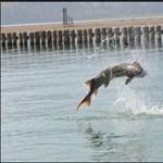 Óriás tokhal támadott meg egy férfit egy amerikai horgászversenyen