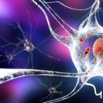 Meglepő felfedezés a Parkinson-kórról: már az ember születése előtt elkezdődhet