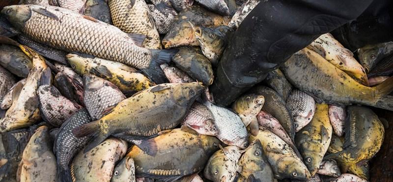 Hiába volt áfacsökkentés, nem lett sokkal olcsóbb a hal