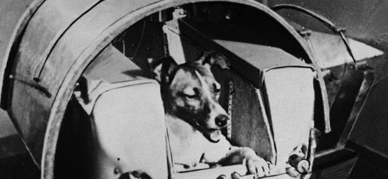 Feláldozták a tudományért: Lajka kutya 60 éve indult az űrbe