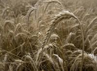 Hamarosan gabonát is arathat a Fidesz-közeli ügyvédcsalád