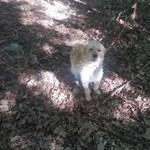 Az erdő közepén hagytak kikötve egy kutyacsaládot Borsodban