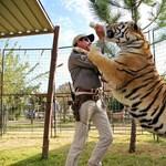 Stream360: Meleg tigrisidomár csinált csodát a Netflixnél