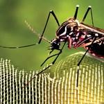 Európa új betolakodói: fapusztító cincér, mérges pók és járványveszélyes szúnyog