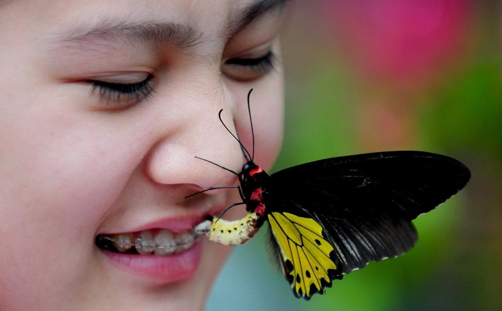afp.14.06.28. - Shenyang, Liaoning, Kína: látogatók a Pillangók völgyében, ahol több mint 20 faj 400 lepkéje látható. - 7képei
