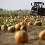 A gazdákat is az internetre csábítják