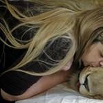 Elpusztult Ariel, a béna oroszlán