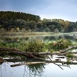 Figyelmeztetnek az MTA kutatói: átalakul a Duna élővilága