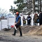 Hiába tüntettek: kivágták egy 150 éves hársfát Piliscsabán