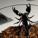 Skorpiót láttak egy Párizsba tartó repülőn