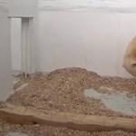 Elpusztult Tonja, a berlini állatkert jegesmedvebocsa