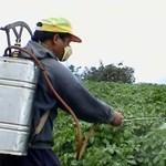 Házi biopermet szúnyogok és levéltetvek ellen