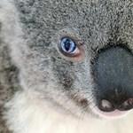 Koala a szikszói iskolákban