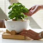 Űrtechnika otthon - neveljünk növényt termőföld nélkül
