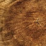 5400 éves faévgyűrűket vizsgáltak a debreceni Atommagkutató Intézetben