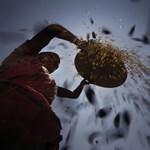 Újabb rizsválság jöhet