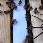 Aggasztó mértékben fogynak a rovarok és a pókok Németországban