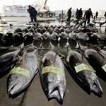 Fagyasztott halak közé dugtak egy tonna kokaint Hollandiában
