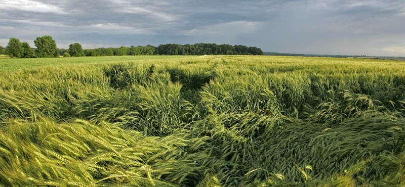 Júliustól feloldhatják az orosz gabonaexport tilalmát