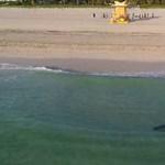 Elég ijesztő ez a videó a cápáról, ami beúszott a fürdőzők közé