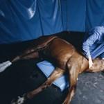 Beteg a lova? Erről ismerheti fel, hogy nyugat-nílusi láza van