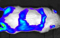 Sok tízmillió emberen segíthet az MTA világító egere