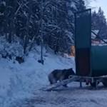 Így fogták be a síelőt kergető medvét (videó)