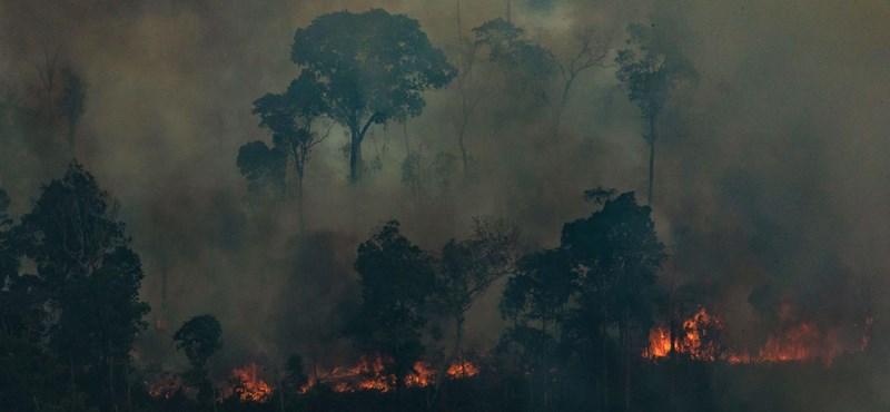 A kezdetleges felszerelés sem riasztja el ezeket az embereket az amazóniai erdőtüzektől