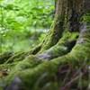 Magyar természetvédelmi szakemberek segítenek be öt balkáni államban