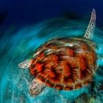 Íme az év legszebb természetfotói - Nagyítás-fotógaléria