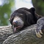 Grizzlymedve ölt meg egy vadászt az Egyesült Államokban