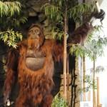 Rájöttek, mi okozta az őskori King Kong vesztét