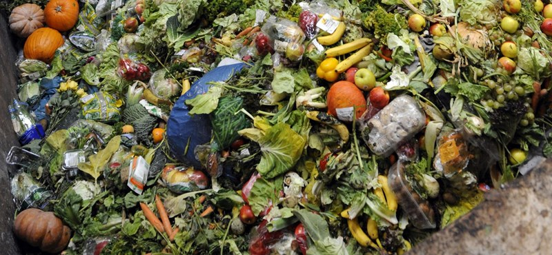 Sokkal több élelem megy a kukákba a világon, mint azt eddig gondolták