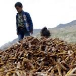 Tizenegy gyermek halt meg a jemeni támadásokban