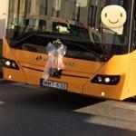 A nap fotója: a Volánbuszé a legmenőbb esküvői autó