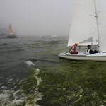 Gyilkos algák miatt tilos fürdeni a Nápolyi-öbölben