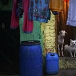 Fotó: kutya-kecske barátság – indiai életkép