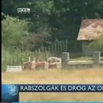 RTL Híradó: a pálházai háziorvos tartott drogtermesztő rabszolgákat a tanyáján