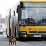 Völner: egymilliárdot nyerhet a vasút a budapesti Volán-járatok kiesésével