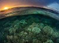 Világjárvány ide vagy oda, a pusztuló környezet tehet be a leginkább a világgazdaságnak