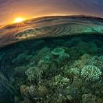 Gazdagabb környékeken nagyobb a biológiai sokféleség