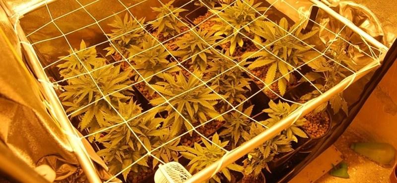 """Kokain és fű házhoz, feladták a leckét a rendőröknek az """"uberizált"""" drogkereskedők"""