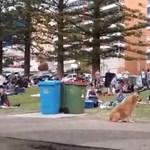 Nem akart hazamenni a kutya, az egész park remekül szórakozott – videó