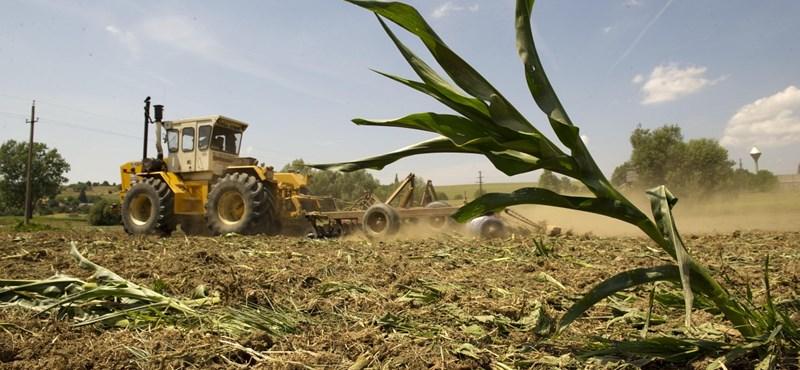 GMO-botrány: ki nyerhet a betárcsázással?