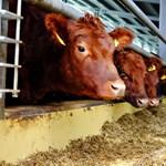 Búcsúzik a marhahústól az egyik legismertebb receptoldal, hogy védje a környezetet