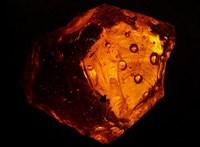Tökéletes állapotban megmaradt darazsakat találtak egy 100 millió éves borostyánkőben