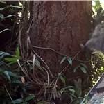 Fára mászni tanítja kölykét egy mosódmedve a nap legaranyosabb videóján